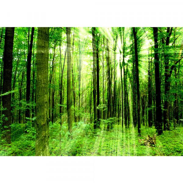 Vlies Fototapete Sunlight Forest Wald Tapete Wald Bäume Sonnenstrahlen grün Ruhe grün