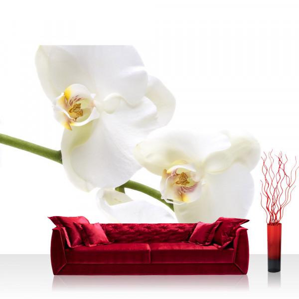 Vlies Fototapete Berge Tapete Orchidee Blumen Blumenranke Weiß Natur Pflanzen Abstrakt grau