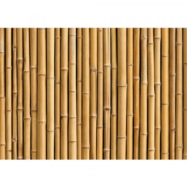 Vlies Fototapete Golden Bamboo Bambus Tapete gold gelb Wald Bambuswald Dschungel Garten Natur Bäume