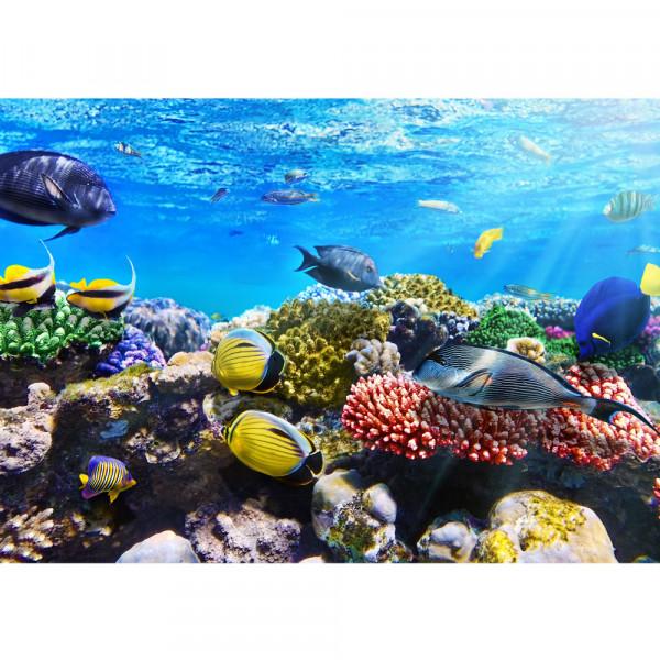 Vlies Fototapete Underwater ReefTiere Tapete Aquarium Unterwasser Meereswelt Meer Fische Riff