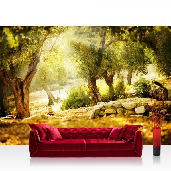 Vlies Fototapete Wald Tapete Wald Sonne Steine Bäume Natur rosa