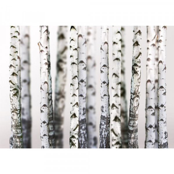 Vlies Fototapete Black an White Birch Trunks Wald Tapete Birkenwald 3D Perspektive Birke Stämme