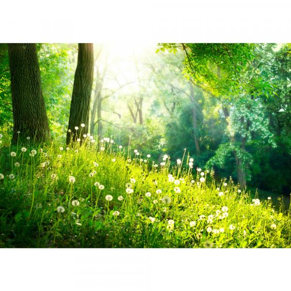 Vlies Fototapete Sunny ForestWald Tapete Wald Bäume Natur Baum grün grün