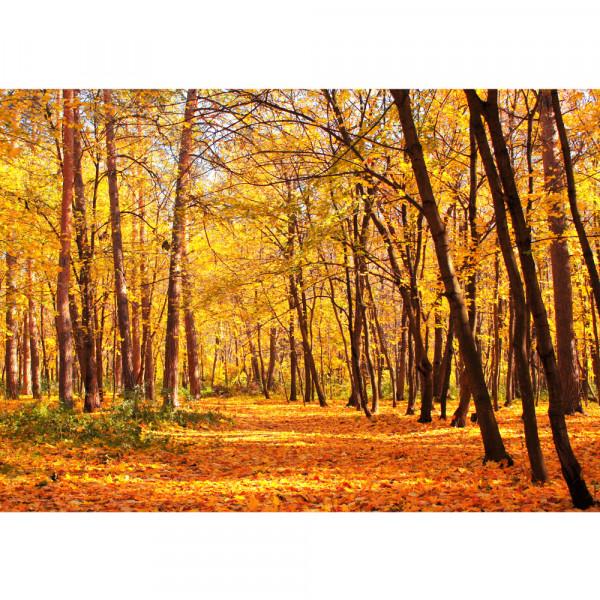 Vlies Fototapete Autumn Forest Wald Tapete Herbstblätter Wald Bäume Baum Forest Herbst orange