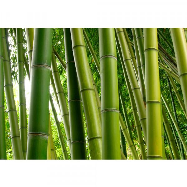 Vlies Fototapete Paradies of Bamboo Bambus Tapete Wald Bambuswald Dschungel Garten Natur Bäume grün
