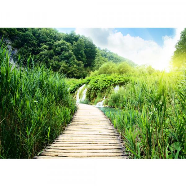 Vlies Fototapete Wood Way in Deep ForestNatur Tapete Holz Weg Grün Feld Natur Landschaft Gras grün