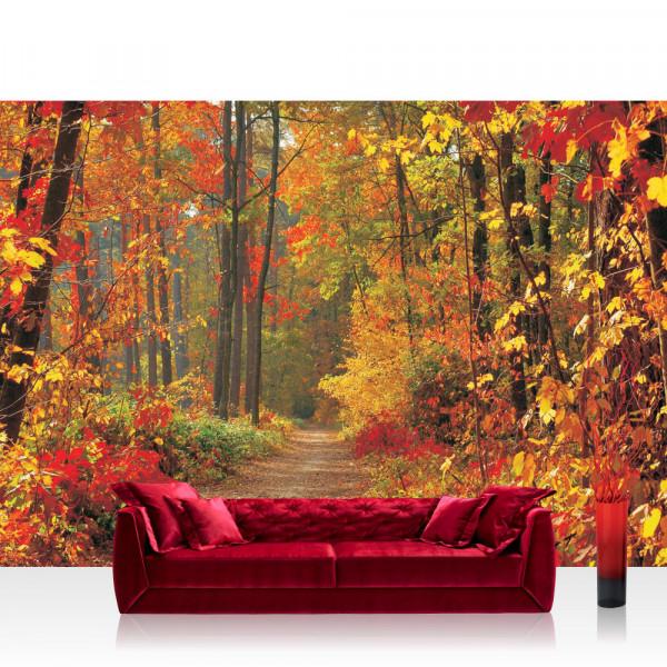 Vlies Fototapete Wald Tapete Weg Wald Bäume Herbst Laub Baum Natur braun