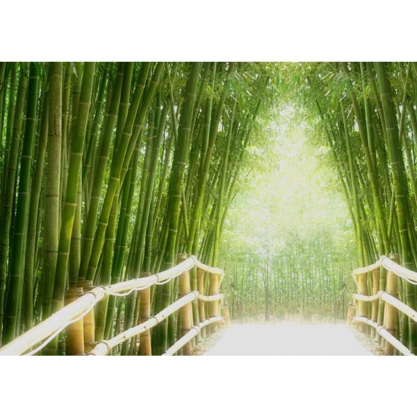Bamboo Walk Wald Tapete Bambusweg Bambuswald Dschungel Asia Asien Bamboo Way Wald grün