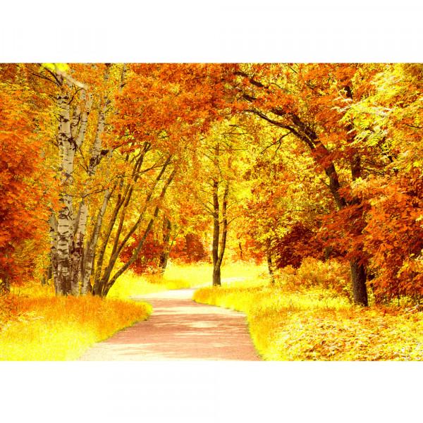 Vlies Fototapete Autumn Leaves Wald Tapete Herbstblätter Wald Bäume Baum Forest Herbst braun