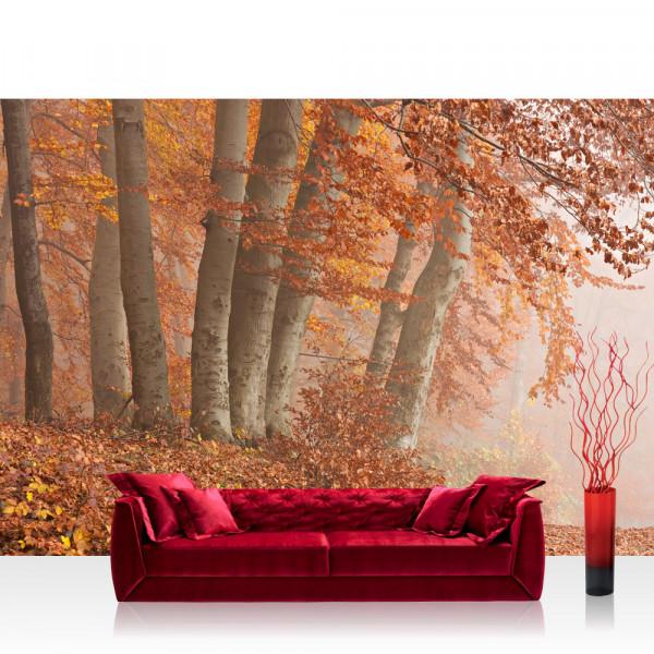 Vlies Fototapete Wald Tapete Wald Bäume Natur Baum Herbst Nebel braun