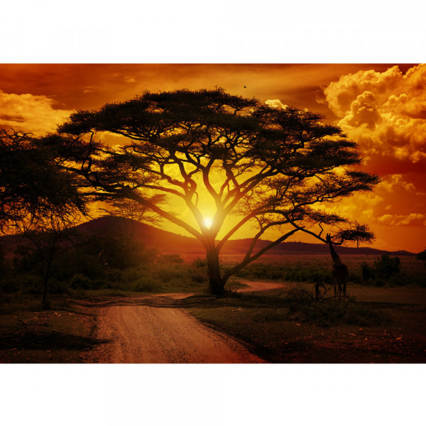 Vlies Fototapete African Sunset Sonnenuntergang Tapete Sonnenaufgang Afrika Steppe Giraffe Orange