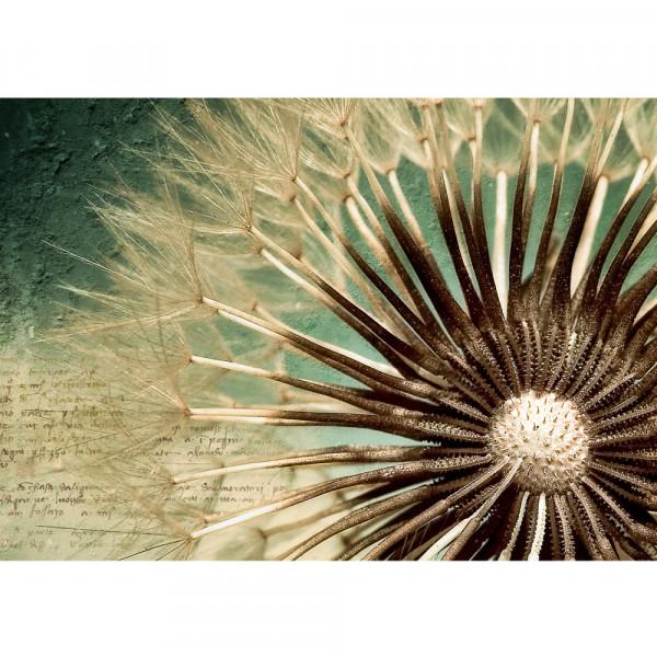Vlies Fototapete Romantic Dandelion Blumen Tapete Blumen Pusteblume Gedicht Natur Löwenzahn Makro