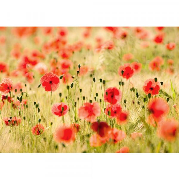 Vlies Fototapete Dream of Poppies Blumen Tapete Romantik Mohn Feld Blumen Gras grün