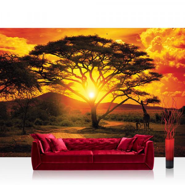 Vlies Fototapete Afrika Tapete Sonnenuntergang Baum Weg Giraffe Savanne Himmel Pflanze Afrika gelb
