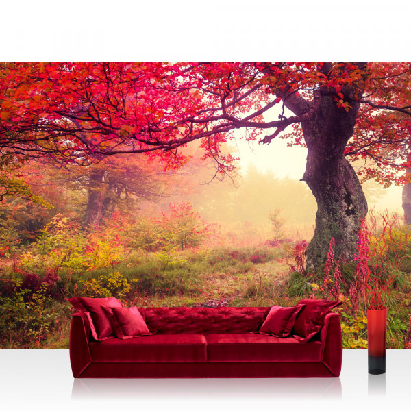 Vlies Fototapete Wald Tapete Wald Bäume Herbst Natur Sonne beige
