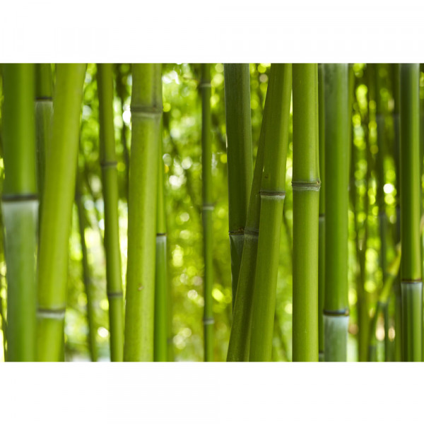 Vlies Fototapete Dream of Bamboo Bambus Tapete Wald Wood Forest Jungle Dschungel Garten Natur Baum