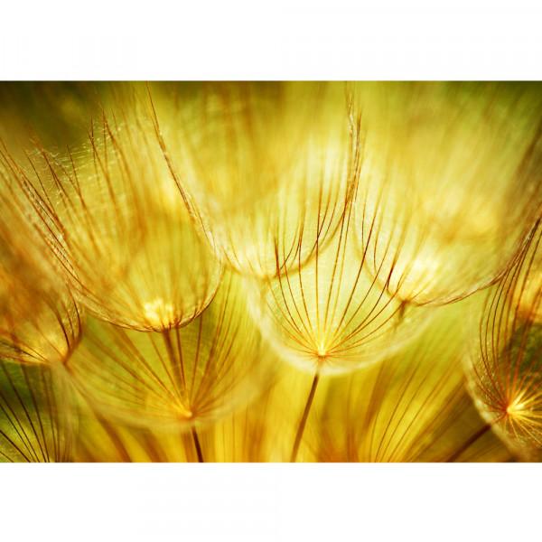 Vlies Fototapete Dandelion Dreams Pflanzen Tapete Pusteblume Löwenzahn Ocker gelb beige ocker