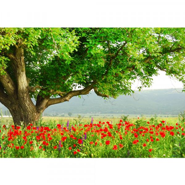 Vlies Fototapete A Beautiful TreeNatur Tapete Natur Mohn Feld Baum Wald Bäume rot grün Idyll grün