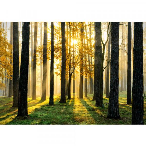 Vlies Fototapete Sunlight Forest II Wald Tapete Wald Bäume Sonnenstrahlen grün Ruhe grün