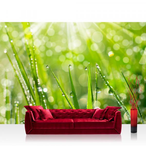 Vlies Fototapete Pflanzen Tapete Gras Halm Grün Wiese Sonne Natur grau