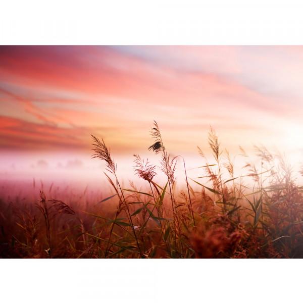 Vlies Fototapete Pink DunesPflanzen Tapete Sonnenaufgang Meer Strand Dünen Rosa Pastell Pink pink